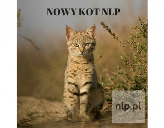 nowy-kot-nlp