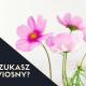 SZUKASZ WIOSNY_